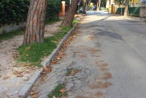 Senigallia, presto una pista ciclabile in viale Anita Garibaldi? Romano interroga, Regine conferma
