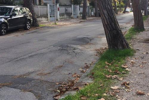 Indagini sugli alberi in viale Anita Garibaldi prima del restyling