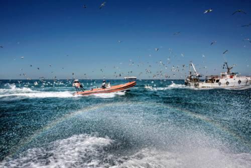 Controllo pesca Italia 2020, brilla Compartimento Marittimo di Ancona