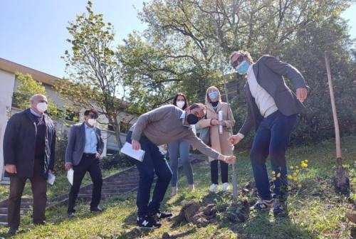 """Ancona diventa """"green"""": in città sono cinquecento gli alberi piantati"""