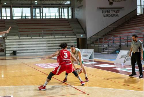 Basket serie B, Goldengas Senigallia ora serve continuità: arriva Civitanova