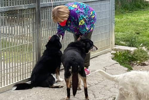 """Canile Anita, tra «amore viscerale» e nuovi progetti. Ecco le """"Adozioni del cuore per i cani del Sud"""""""