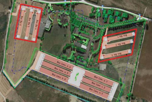 """La Regione Marche dice """"no"""": cade l'ipotesi dell'allevamento Fileni a San Lorenzo in Campo"""