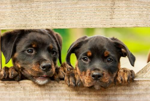 Vallefoglia, otto cuccioli di cane abbandonati. Ucchielli: «Gesto incivile e un reato»