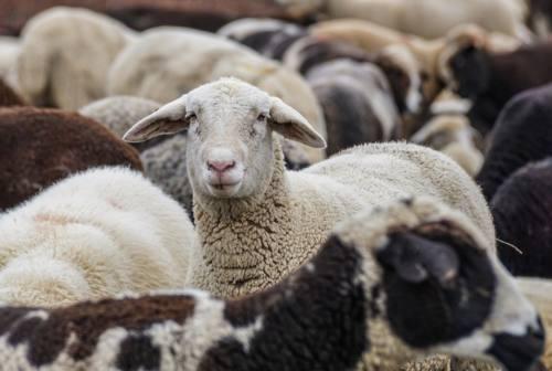 Sequestrato allevamento abusivo di animali nella vallata del Tronto