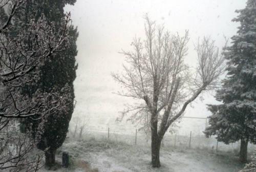 Coldiretti: «Neve e gelo, raccolti a rischio in provincia di Pesaro»