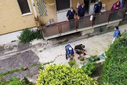 Un capriolo nel giardino di un condominio, task force ad Ancona per liberarlo – VIDEO