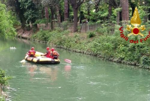 Fano, capriolo finisce nel canale Albani: salvato dai Vigili del Fuoco