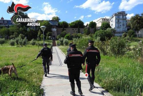 Jesi, parchi al setaccio dei carabinieri: prova antidroga superata