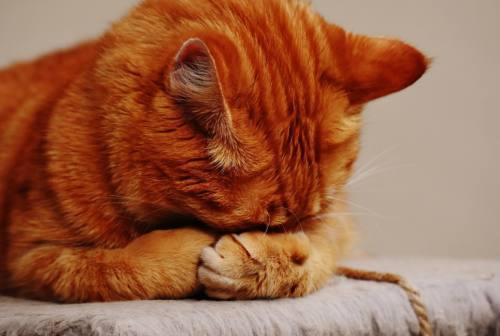 Matelica, afferra una gatta dalla coda e la sbatte contro il muro: due mesi a un 47enne