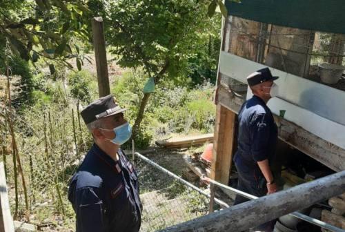Pesaro, occupazioni abusive sul Genica: a rischio il deflusso dell'acqua
