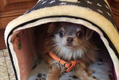 Allevamento di Trecastelli: 13 cani negativi alla Brucellosi hanno trovato casa, ma per gli altri l'incubo continua