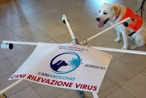 Cani anti-Covid, lo studio dell'Università Politecnica delle Marche