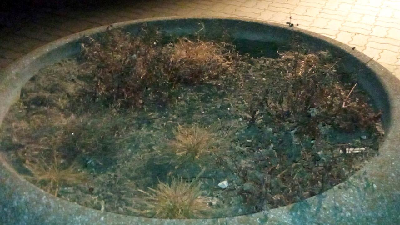"""Mancata cura del verde a Senigallia, estate 2021. Foto da """"Sei di Senigallia se..."""""""