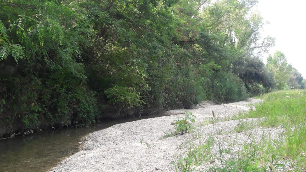 Detriti e vegetazione ostacolano il deflusso delle acque del fiume Cesano a Senigallia
