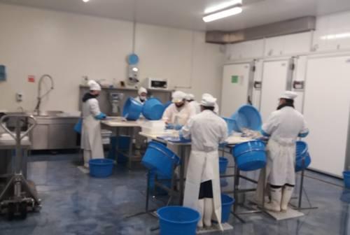 San Benedetto, si progetta il rilancio della filiera ittica partendo dal Centro Agroalimentare Piceno