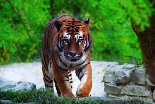 Parco zoo di Falconara, torna l'angolo Casa Natura