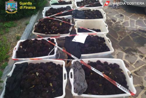 Sequestrati a Portonovo 12 mila ricci di mare: nei guai 6 pescatori di frodo