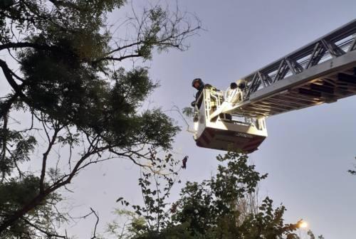 Pesaro, gattino incastrato a 15 metri d'altezza salvato dalle volontarie Enpa e Vigili del fuoco