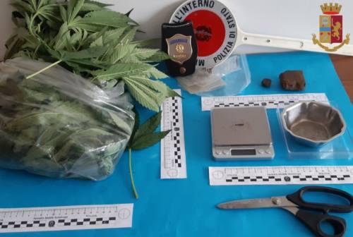 Jesi: una serra in soffitta e marijuana nell'orto di casa, denunciato un 60enne
