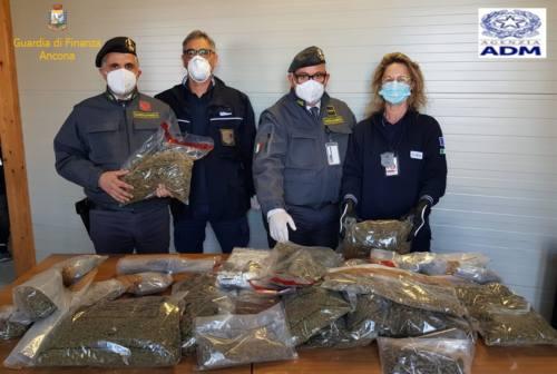Aeroporto di Ancona, droga in pacchi diretti all'estero. Sequestrate anche 132 piante di marijuana