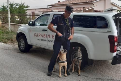 Sassoferrato: due bocconi avvelenati ritrovati a Monterosso