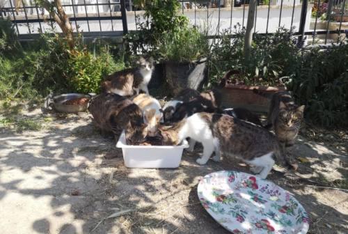 Ancona: bloccate le sterilizzazioni dei gatti all'Asur, insorgono gli animalisti