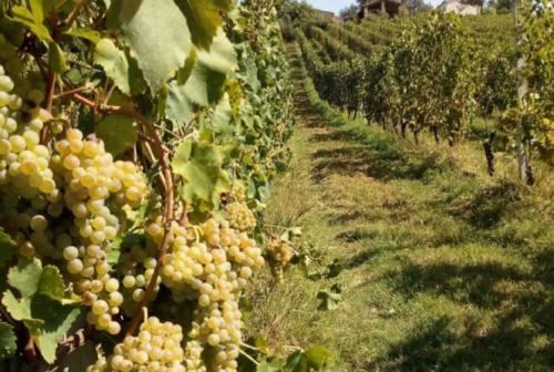 Geologia e vini nelle Marche, un viaggio alla scoperta delle eccellenze territoriali