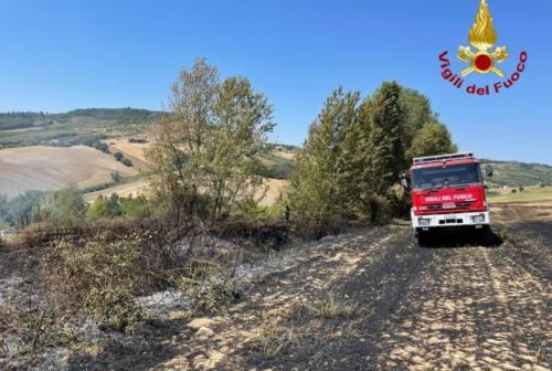 Il fuoco divora 1500 metri quadrati di collina tra Maiolati Spontini e Castelplanio