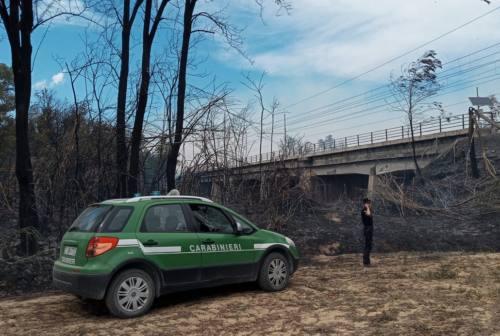 Maxi incendio Castelfidardo, Acquaroli: «Mi auguro che la natura dolosa sia scongiurata»