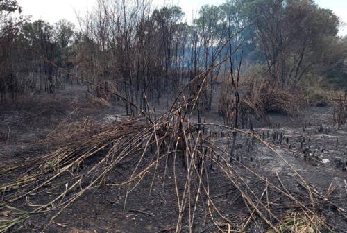 Maxi incendio tra Castelfidardo, Loreto e Porto Recanati: proseguono le operazioni di bonifica