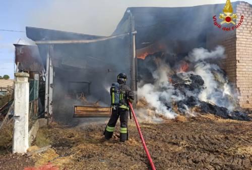Treia, incendio in un fienile. Alcune mucche salvate dalle fiamme