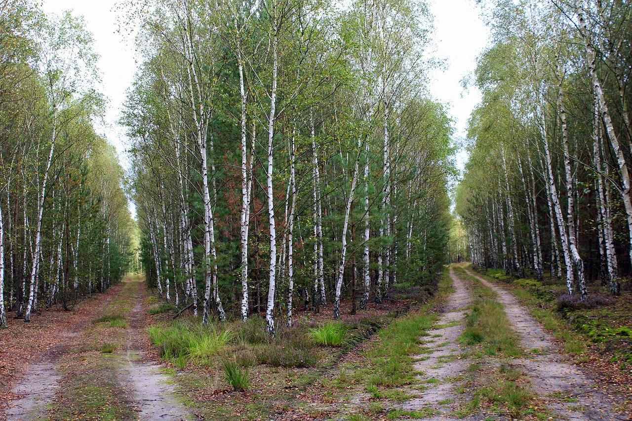 foresta, strade, bivio