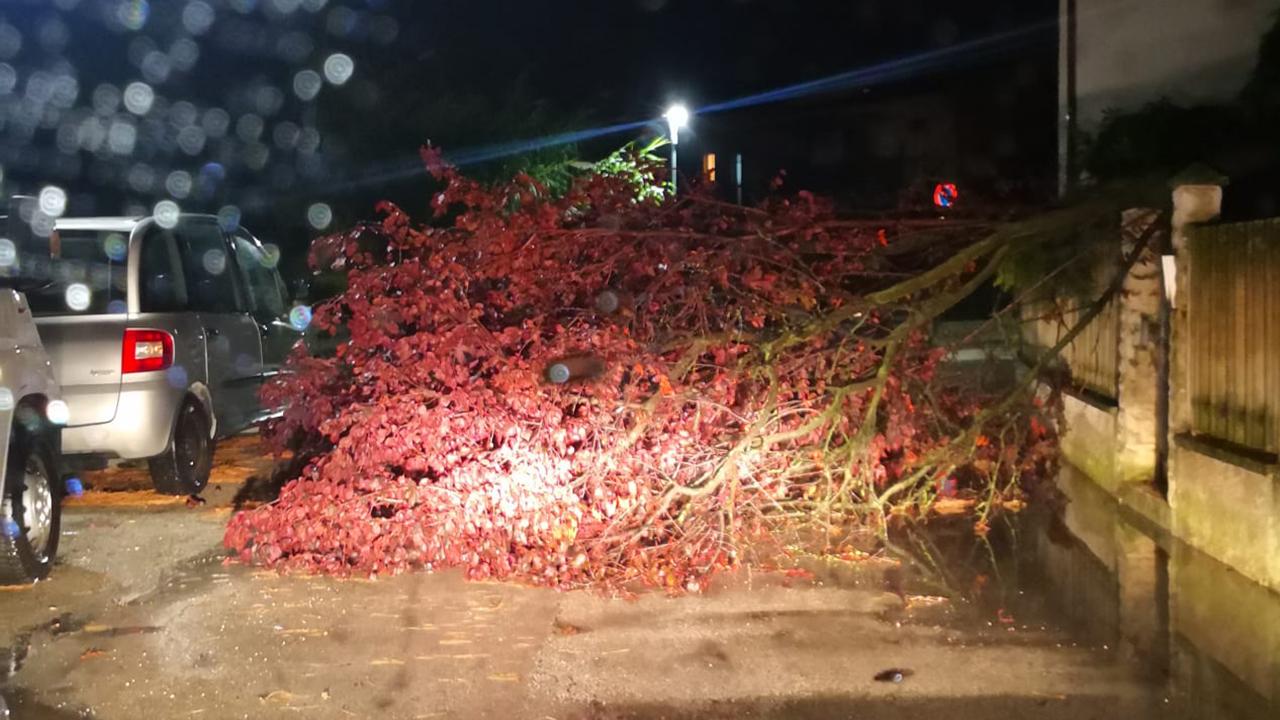 Uno degli alberi abbattuti a Montemarciano a causa del maltempo del 26 settembre 2021