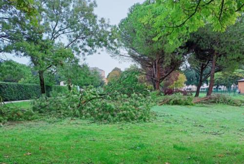 Maltempo a Senigallia, decine di alberi e rami caduti in strada