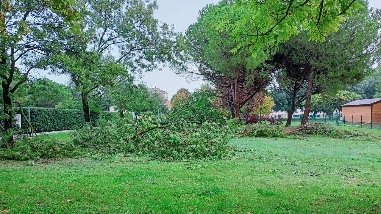 Gli alberi e rami caduti a terra a Senigallia, sfiorando l'asilo L'Aquilone