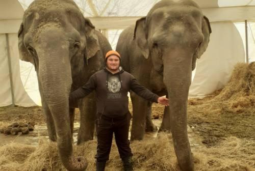 Circo bloccato a Fabriano, muore un elefante. Il sindaco ringrazia chi ha aiutato