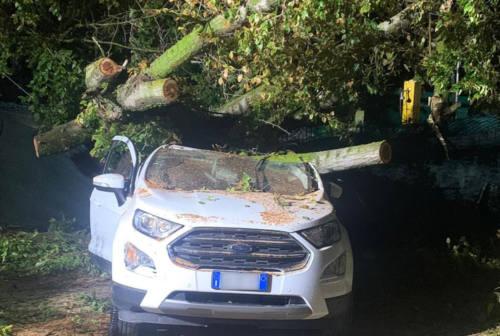 Albero cade su un'auto, bloccati a Portonovo dal maltempo