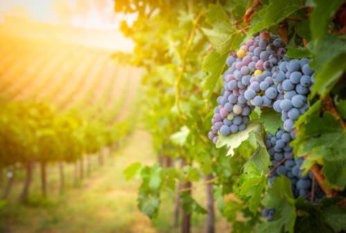 Successo per i vini piceni al Sana di Bologna: cresce la produzione biologica