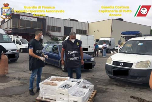 """Porto di Ancona, sequestro di pesci e molluschi alla banchina. Ecco l'operazione """"Pescato sicuro"""""""