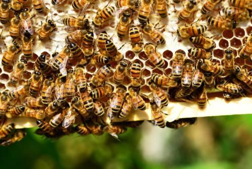 Il meteo pazzo mette alle corde anche le api