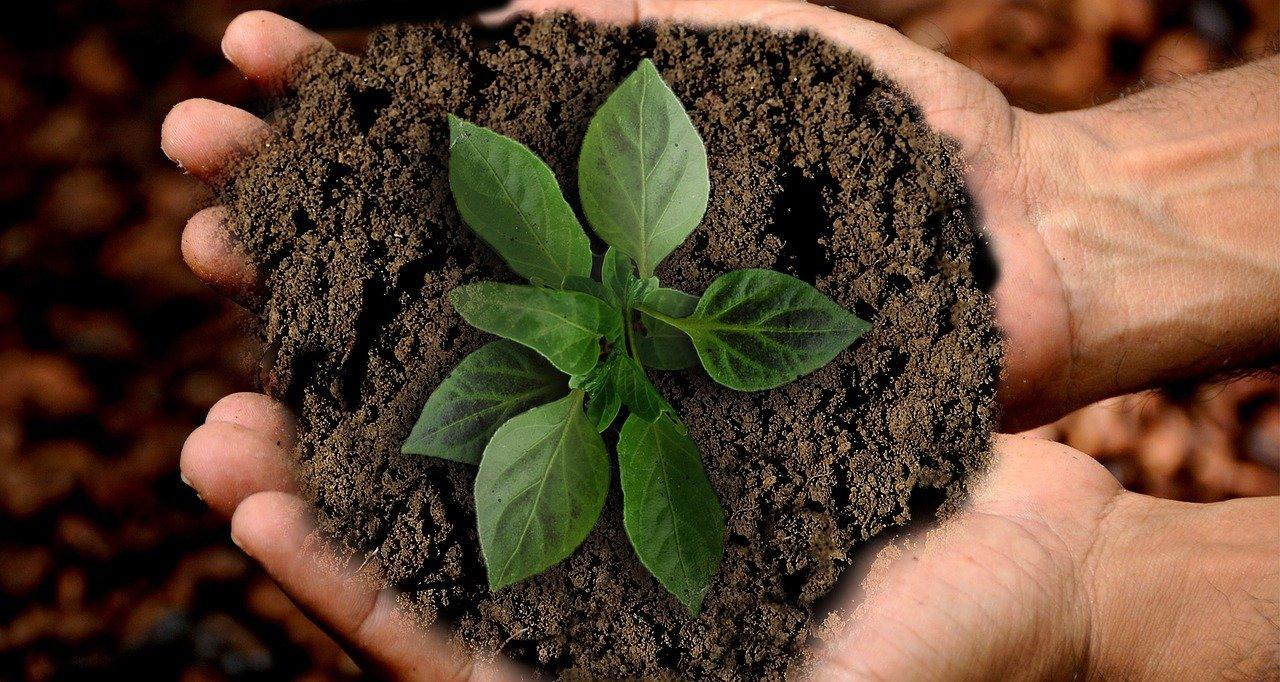 sostenibilità, terra