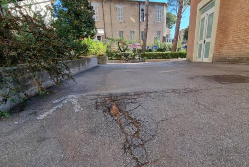 All'ospedale di Senigallia viabilità malridotta: buche e radici ostacolano le ambulanze