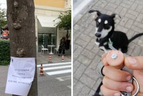 Ancona: esche con viti per far morire i cani, avvistati bocconi al viale e al cimitero