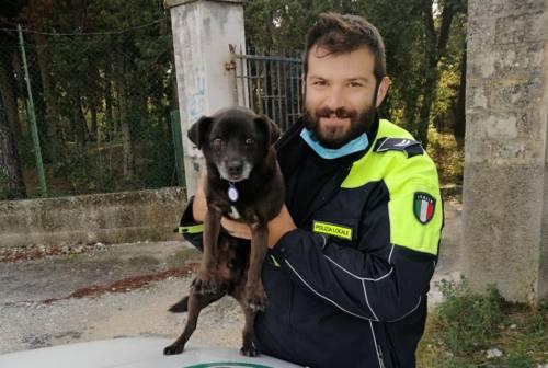 Jesi, cagnolino cade in un pozzo: salvato dalla Polizia locale