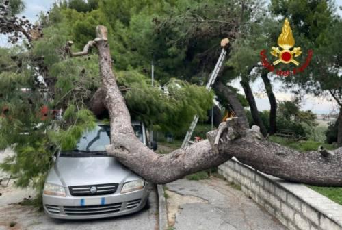 Montemarciano, albero cade su un'auto in sosta